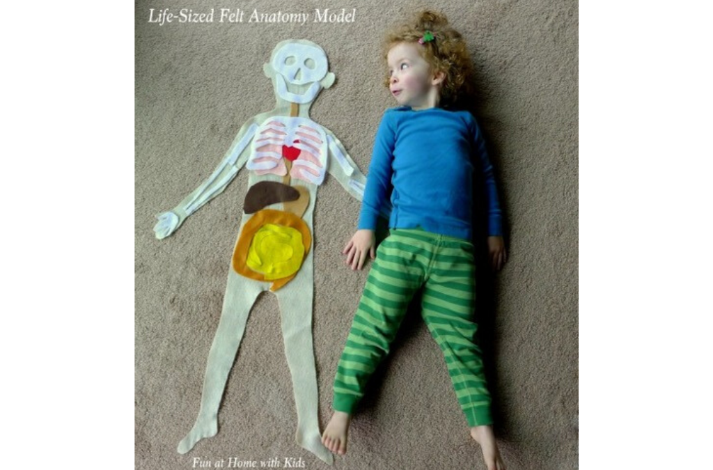 YumNaturals Emporium- Bringing the Wisdom of Mother Nature to Life - Learning About Our Bodies is Fun With Felt